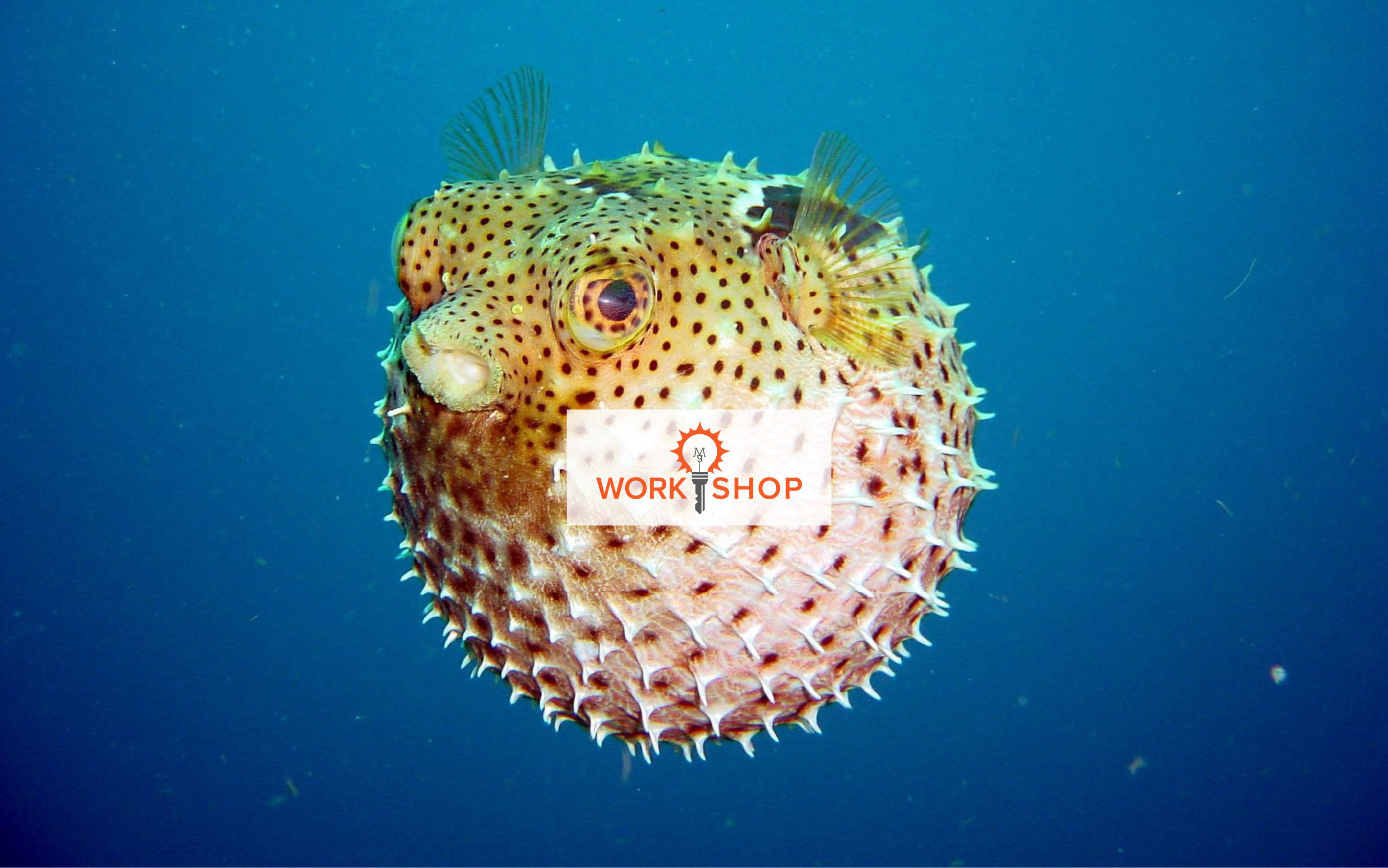 PufferFish-work.shop